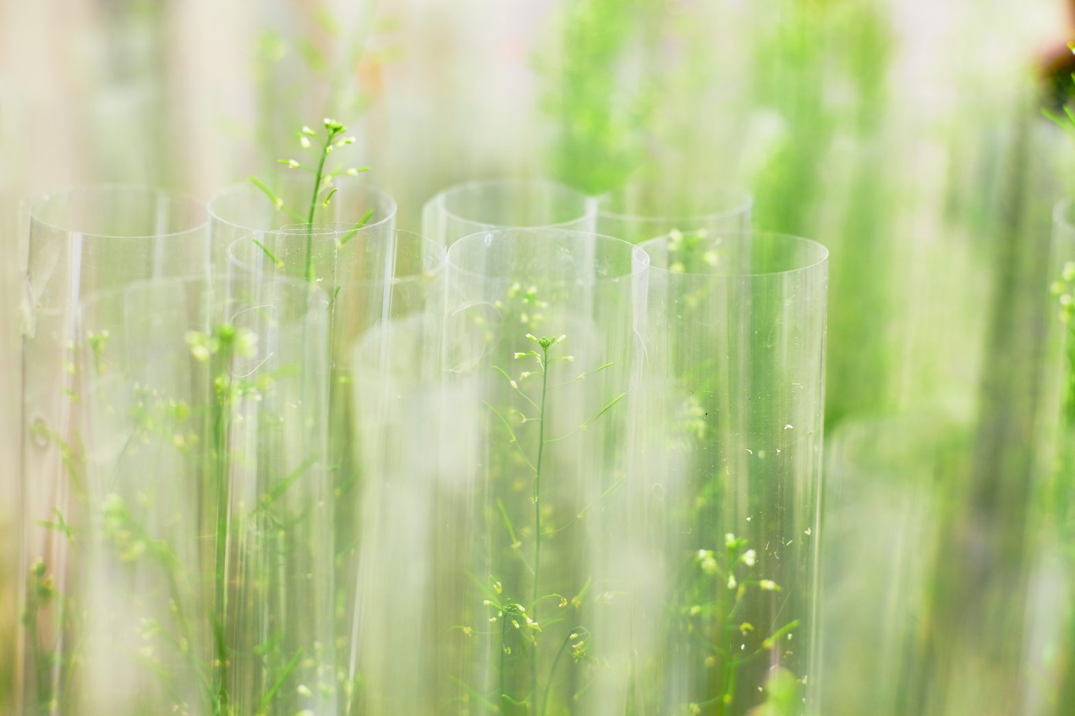 Plants in test tubes, Biological Signalling Research